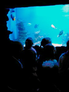 oceanarium-perlyna-1