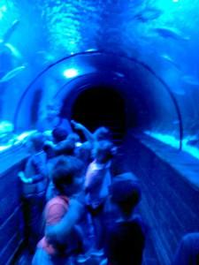 oceanarium-perlyna-12