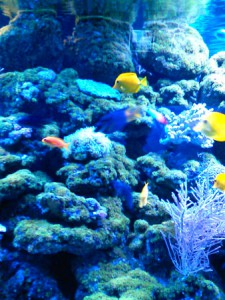 oceanarium-perlyna-2