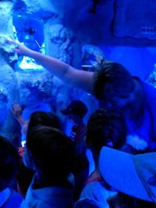 oceanarium-perlyna-5