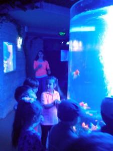 oceanarium-perlyna-9